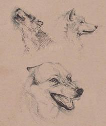 Wolf pen studies by KareinLee