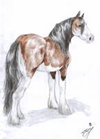 Daphne the horse by DaphneBlake