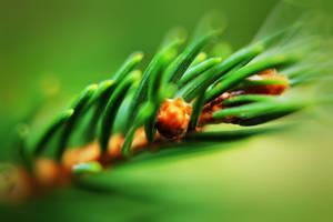 pine by stevenfields