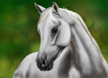 White Grey Arabian by OutlawQueenn