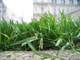 grass by crappy