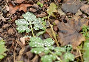 Leaf by frolka