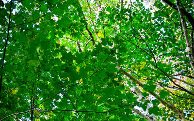 Canopy by meta474