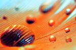 Orange droplets by linda-Bee