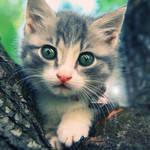 Kitty by linda-Bee
