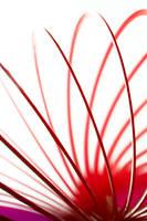 Slinky by linda-Bee