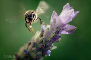 B-lieve by linda-Bee