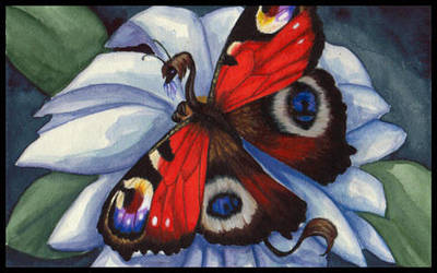 Peacock butterfly by JessicaMDouglas