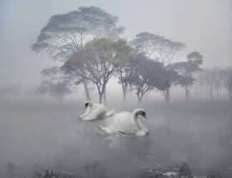 Swan Lake by willowdiamond