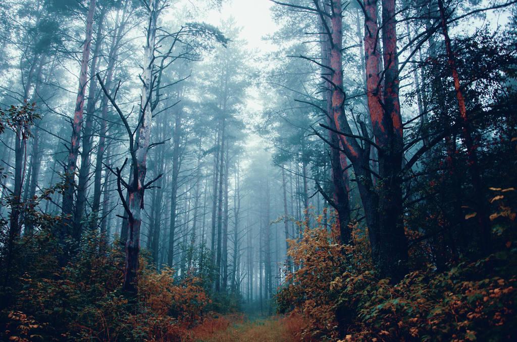 Misty morning II by HendrikMandla