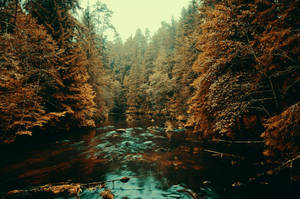Forest river by HendrikMandla