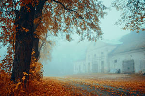Fall by HendrikMandla