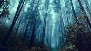 Through the forest by HendrikMandla