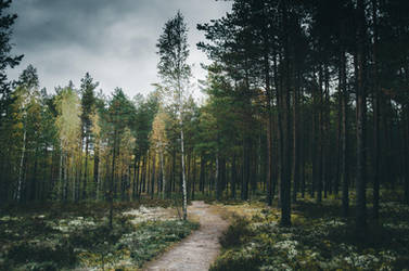 Estonian forest by HendrikMandla