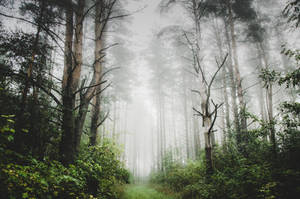 Enter the forest by HendrikMandla
