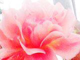 .flower. by nexxiss