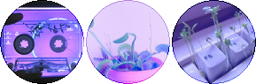 purple and pink plant circle divider by cal-vain