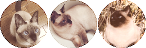 siamese cat circle divider by cal-vain