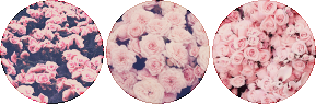 rose-struck circle divider by cal-vain