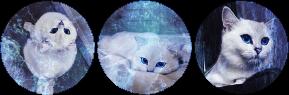 ocean blue kitten circle divider by cal-vain