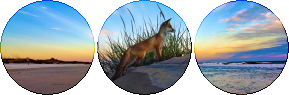 fox beach circle divider by cal-vain