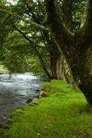 Woodland 15 by joannastar-stock
