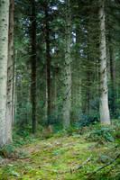 Woodland 29 by joannastar-stock