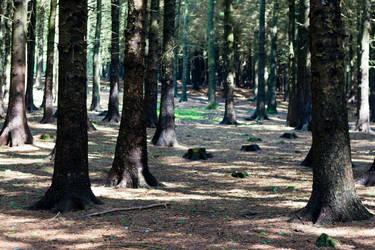 Woodland 153 by joannastar-stock