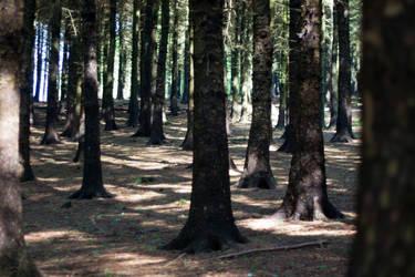 Woodland 157 by joannastar-stock