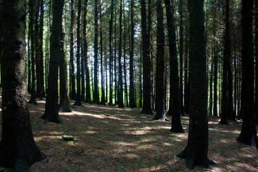 Woodland 148 by joannastar-stock