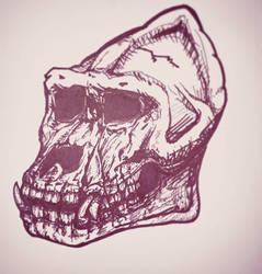 Orangutan Skull by skullzhead