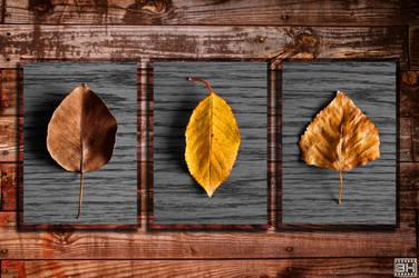 Autumn Triptych by Horzescu