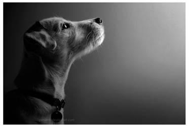 Pining Puppy by Yanareb