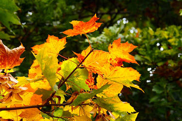 Autumn Leaves 1 by TSDMK