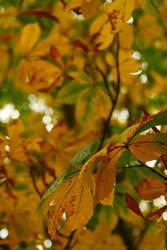 Autumn Leaves 2 by TSDMK