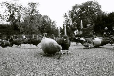 Pigeon by TSDMK