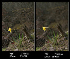 Apertures - Sharpness by OK-Photography