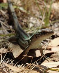 Curious Lizard by StrayingRisu