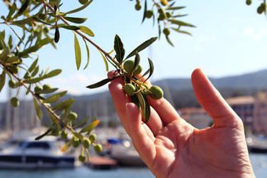 Olivetree in Marina by StrayingRisu