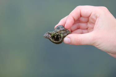 Hermit Crab by StrayingRisu