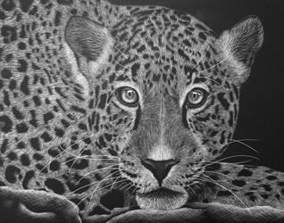 Jaguar Scratch Art by Kat-Naps