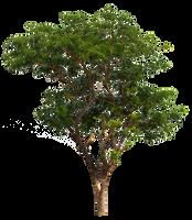 tree by andhikazanuar