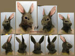 Eastern Cottontail by MissRaptor