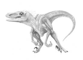 Raptor by pythonelmer