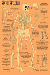Skeletal Study by CourtneysConcepts