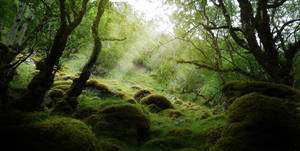 scottish primeval forest by max702