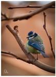 Fat Bird by Robinours2b