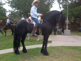 Modern Day Vaqueros by Diana-Huang