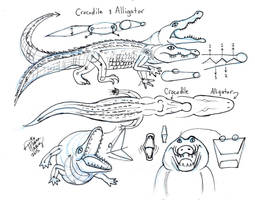 Draw Crocodile and Alligator by Diana-Huang