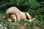 Sleep of White King by NicamShilova